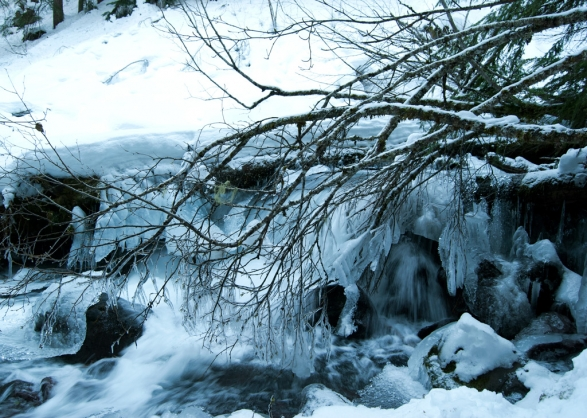 TFfalls-icedbranches